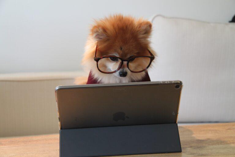 Landingpage dog working on laptop